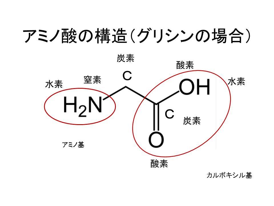 アミノ酸の構造(グリシンの場合)
